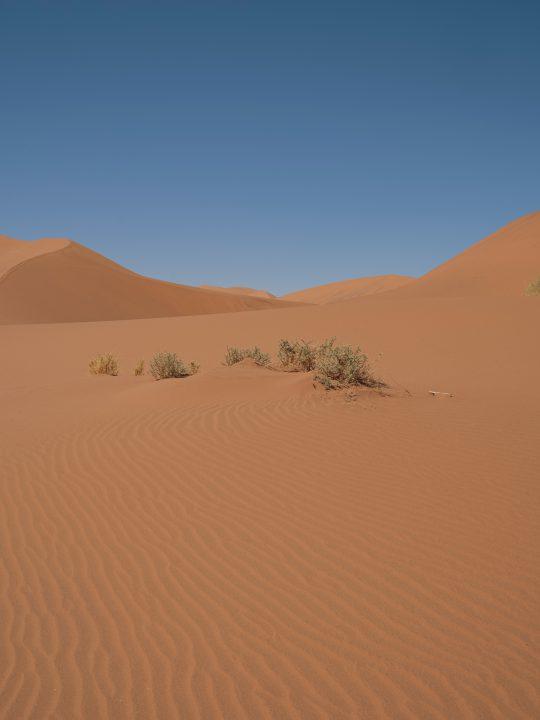 OCEAN TO DESERT: LIFE BALANCED IN UNUSUAL PLACES