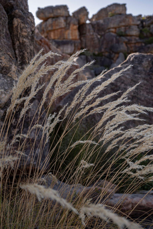THE IMMORTAL VIGOR OF GRASS